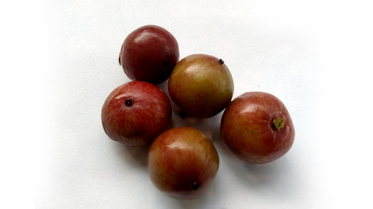Ramonchi-or-Uguressa-Healthy-Fruit-Found-in-Sri-Lanka